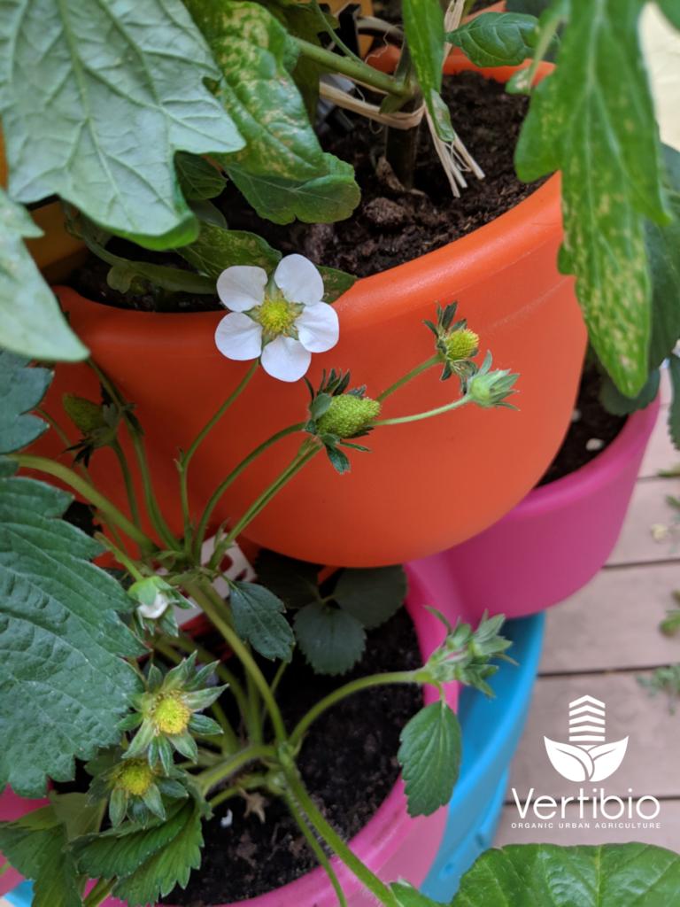 Jardin_composteur_permaculture_recyclage_fleur_decoration_fraise