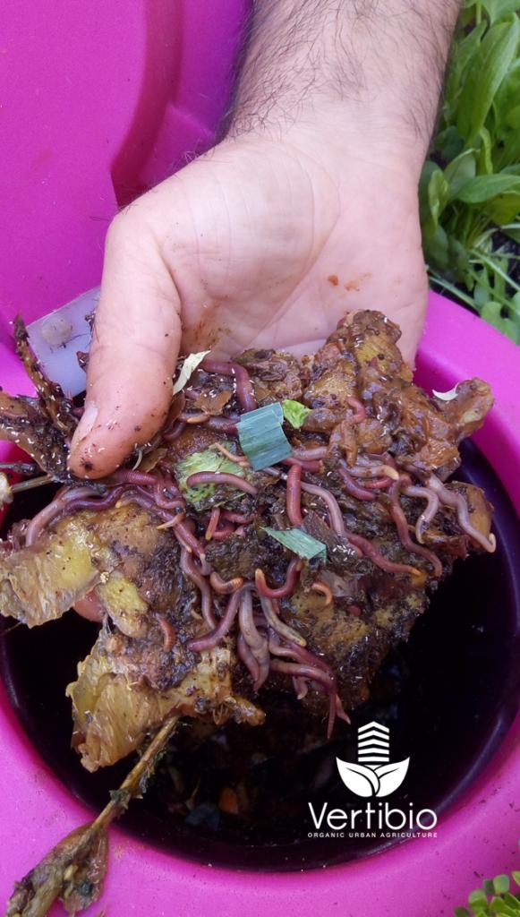 Jardin_composteur_permaculture_recyclage_fleur_decoration_vers de compost